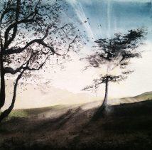 | Sophie Ruel - artistAu grand jour | Sophie Ruel - artiste *VENDU*e